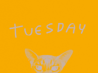it's tuesday, if you want it