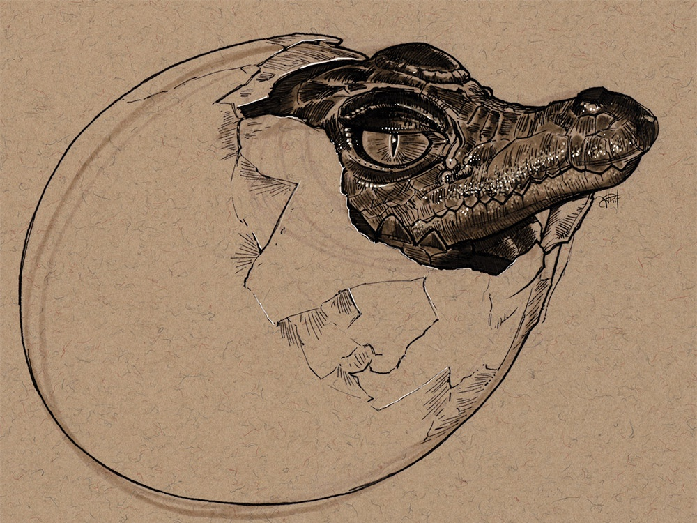 Crocodile hatching pen and ink animal art hatching crocodile illustration sketch drawing