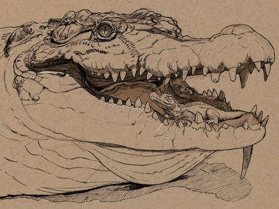 Big Momma mother crocodile ilustration drawing pen and ink