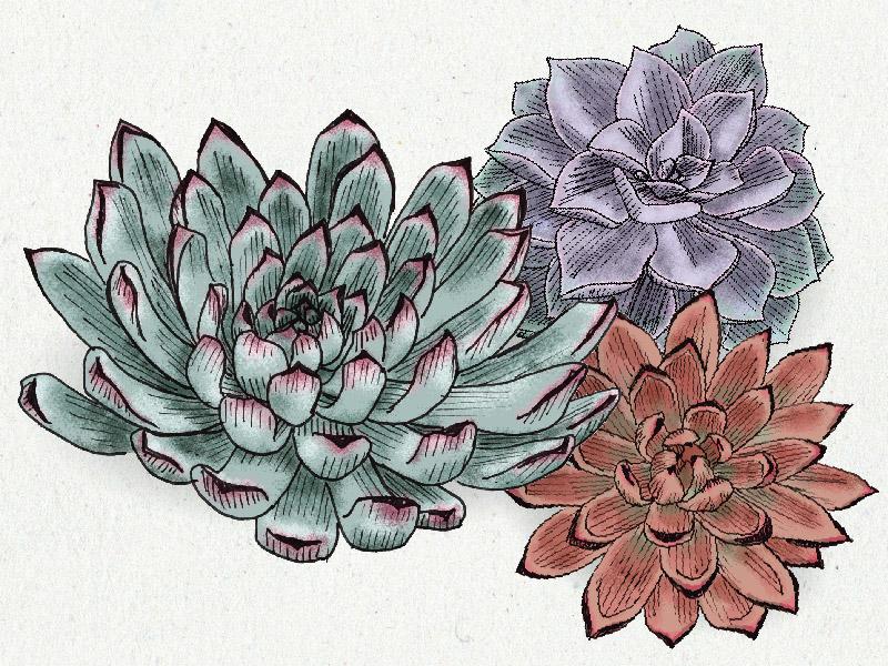 Savethedate Tpp Ms R3 06 invitation wedding drawing illustration succulents plants