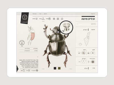 Insect Definer - IPad app insect interactive ux ui app