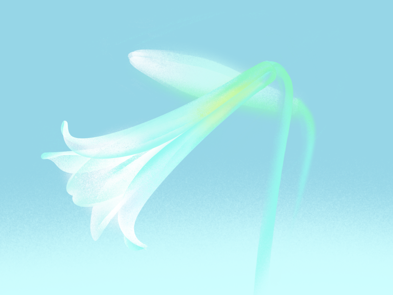 Easter lilies flower illustration easter lily
