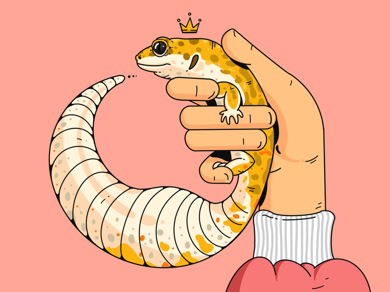 Leopard Gecko ipad procreate reptile leopard gecko illustration