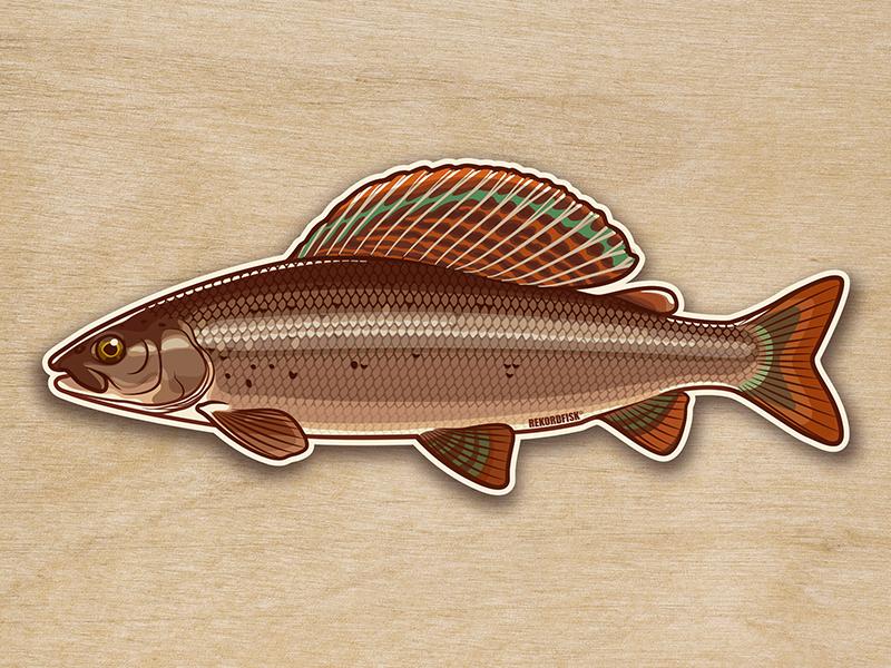 Grayling sticker vector fishing illustration sticker johanillustration