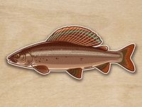 Grayling sticker