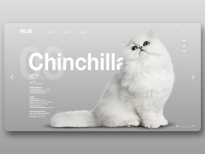 Felis Page 3 page web chinchilla design ux ui interface cat