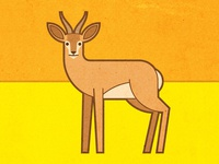 Negev Desert animals - Deer