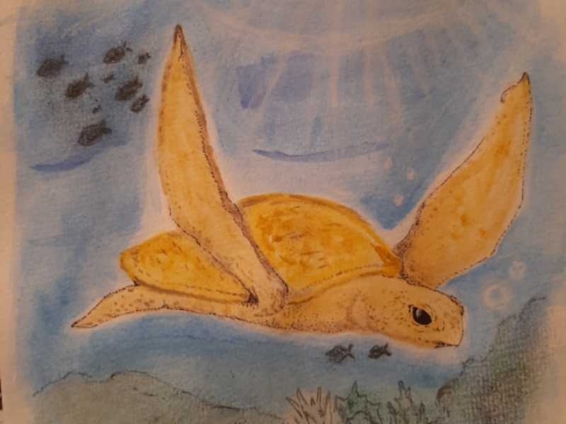 Turtle! charcoal colored pencil deepsea turtle illustration watercolor