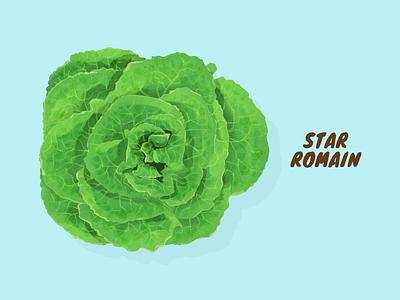 Star Romain vector illustration artwork