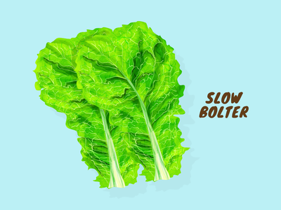 Slow Bolter vector illustration artwork