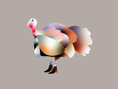 Party Turkey bird thanksgiving gradient vector texture editorial branding illustration boots turkey
