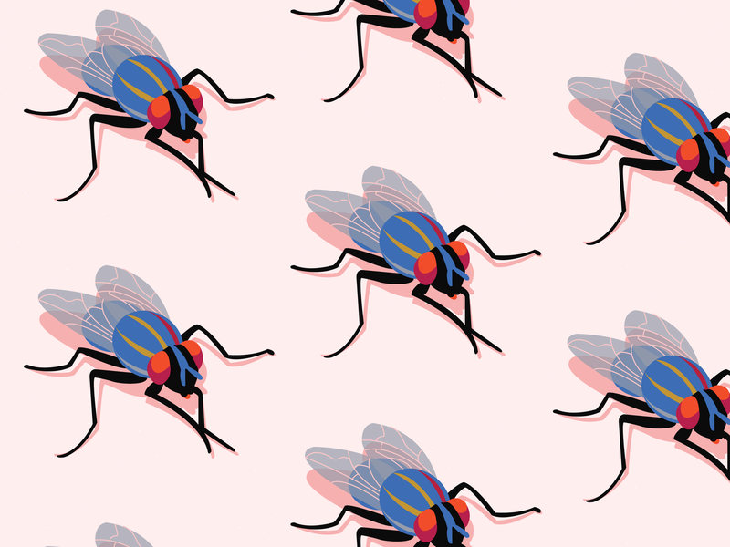 What flies are planning insects pattern pink adobe illustrator digital painting illustration flies