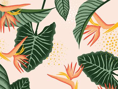 Kulia Skincare Floral Illustration plants branding hawaii tropical floral skincare illustration