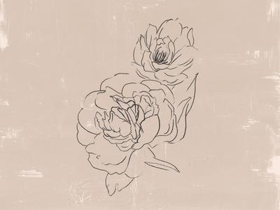 Peony Flower Illustration