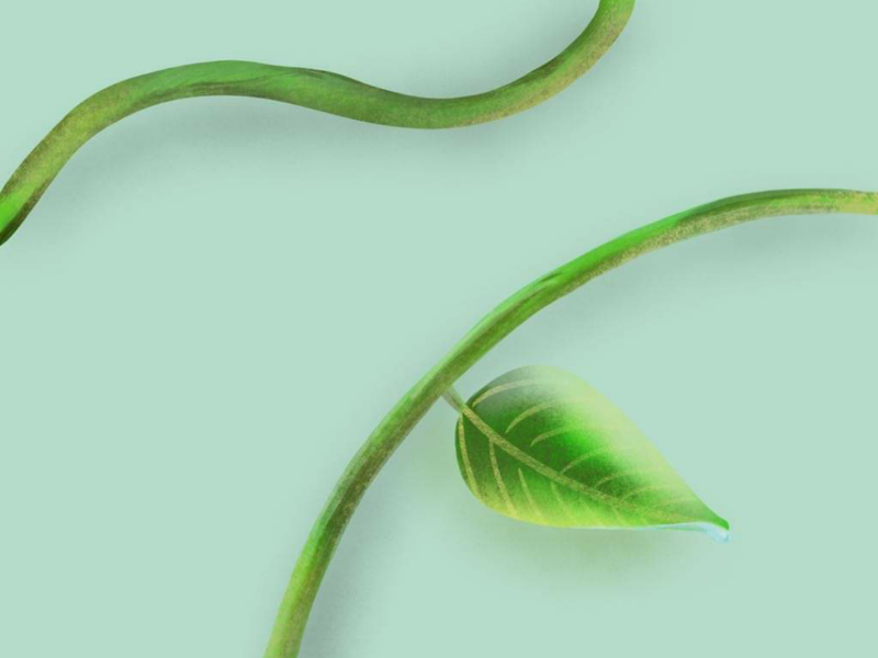 Illustrated Leaf 🌿 digital illustration natural nature leaves leaf illustration procreate
