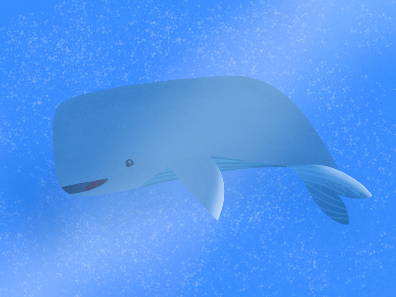 The Whale 🐳 illustrations vector illustration procreate under the sea water whale