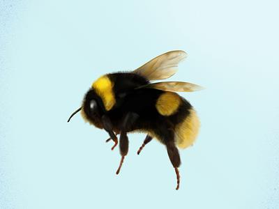 Busy little bee nature animals details illustrator logo design procreate graphic designer illustration hand drawn
