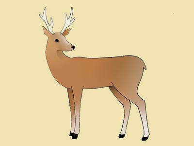 Deer (coloured in) illustration sketch deer animal