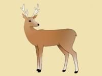 Deer (coloured in)