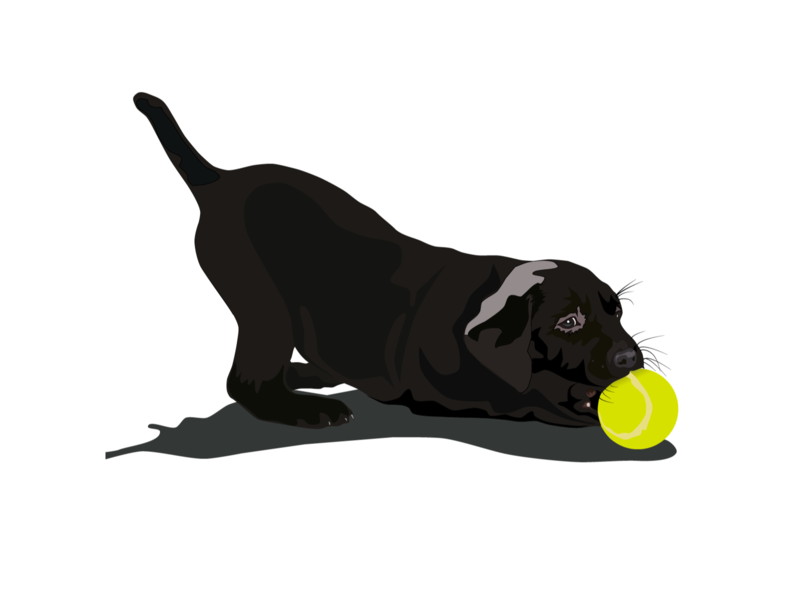 Labrador illustration design dog illustration dog illustration