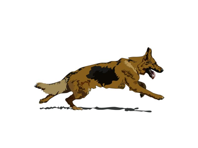 German Shepherd vector dog illustration dog design illustration