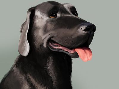 Dog dog animal color cartoon photoshop illustration digital design