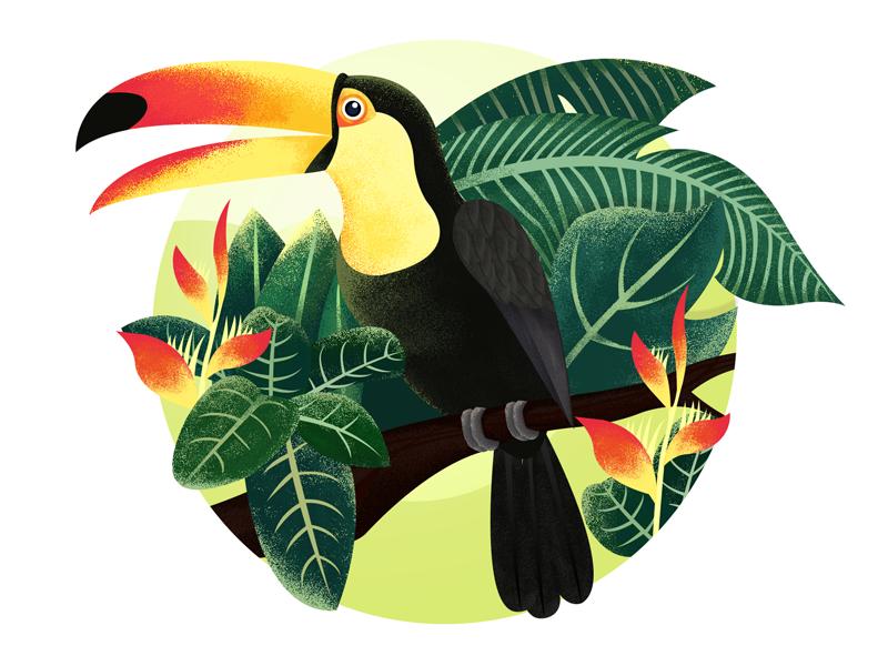 Toucan - Jungle - Illustration illustration jungle toucan