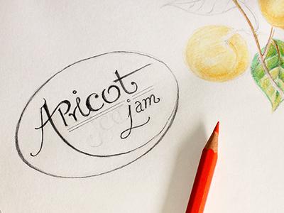 Jam Labels - Sketch phase - Apricot labels type illustration