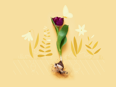 Tulipe papillon tulipe fleur butterfly illustration design animation flower