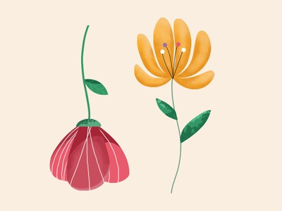 Spring - flower plant illustration illustrator photoshop garden plant spring flower