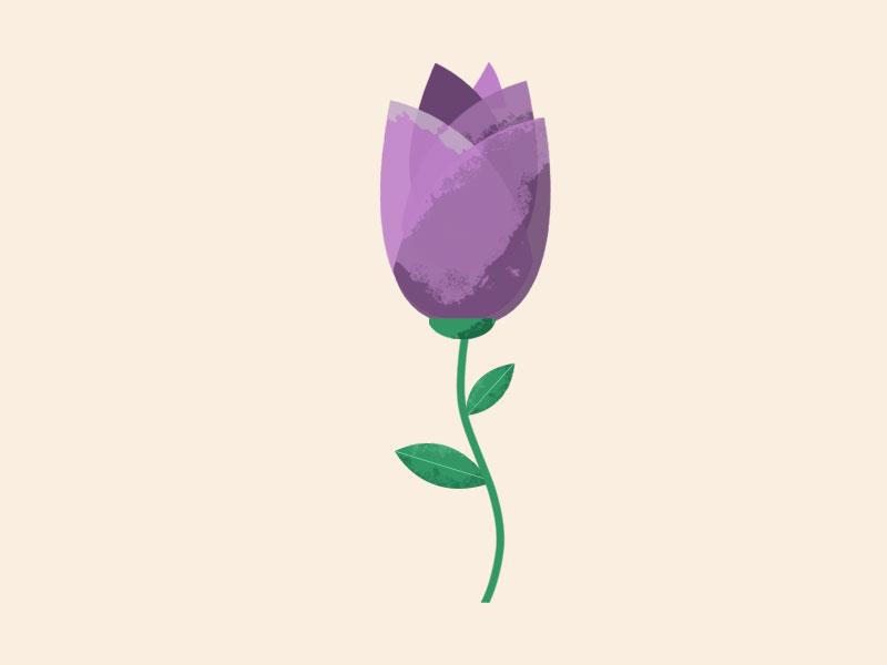 Spring - Tulip spring graphic design illustrator plant tulip flower