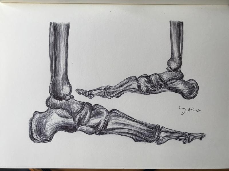 Ballpen Bones
