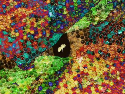 Fruity Pebbles.