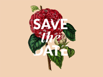 Save the Date🌹 celebration visual teaser invite indian weddings