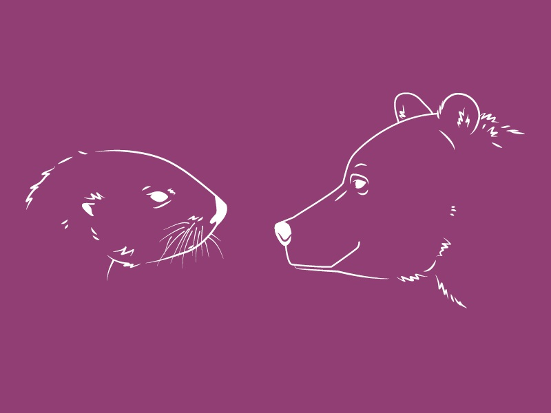 Bear And Otter #2 2d line vector illustration wildlife animals aquarium zoo otter bear