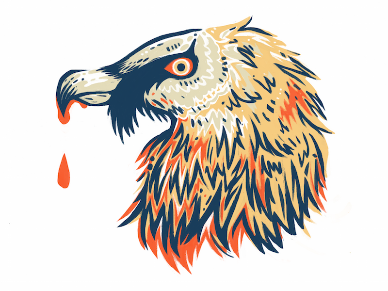 Lammergeier bird icon sticker vulture