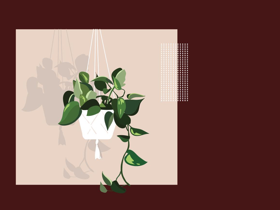 Verde App Illustrations app illustration plants foliage