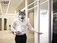 Wolf At Office