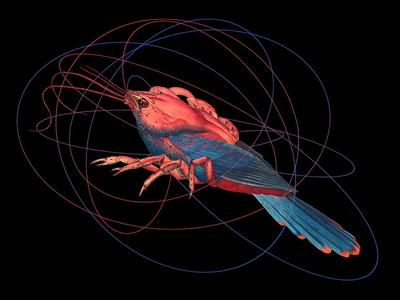 into you someone creature love art collage symbiosis mimicry bird crab