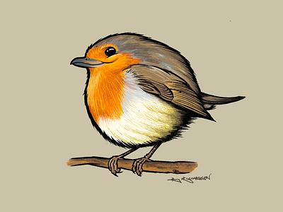 Robin british ipad procreate illustration birds bird robin