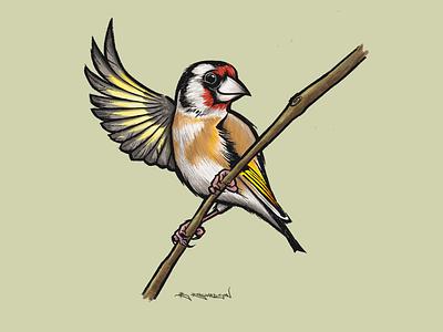 Goldfinch ipad procreate uk illustration british birds bird goldfinch