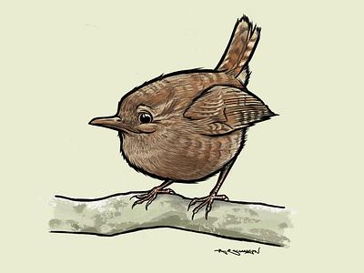 Wren ipad infinitepainter uk british illustration birds bird wren