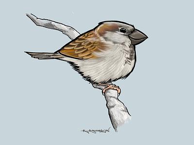 House Sparrow digital art ipad procreate british illustration bird sparrow
