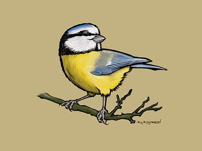 Blue Tit procreate brucesart illustration birds bird british blue tit
