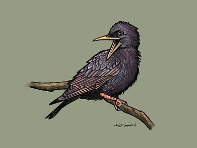Starling uk british procreate ipad illustration birds bird starling