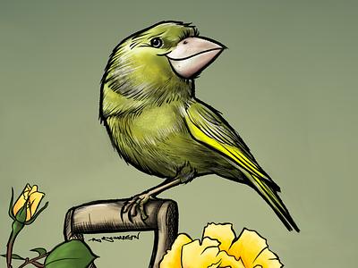 Greenfinch procreate ipad illustration greenfinch birds bird