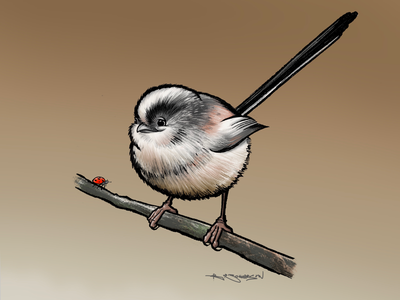 Long-tailed tit ipad procreate illustration british birds bird long-tailed tit