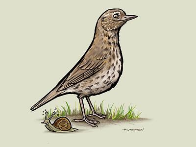 Song Thrush illustration uk british bruces art digitalart procreate illustration birds bird song thrush