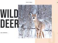 Wildlife animals concept 01
