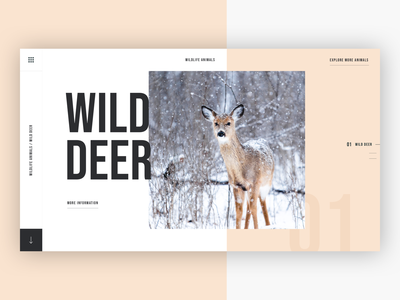 🦌 Wildlife Animals - Wild Deer design sketch ui ux photoshop clean web design concept uidesign uxdesign website typography animals wildlife concept design creative agency creative wild deer wildlife animals